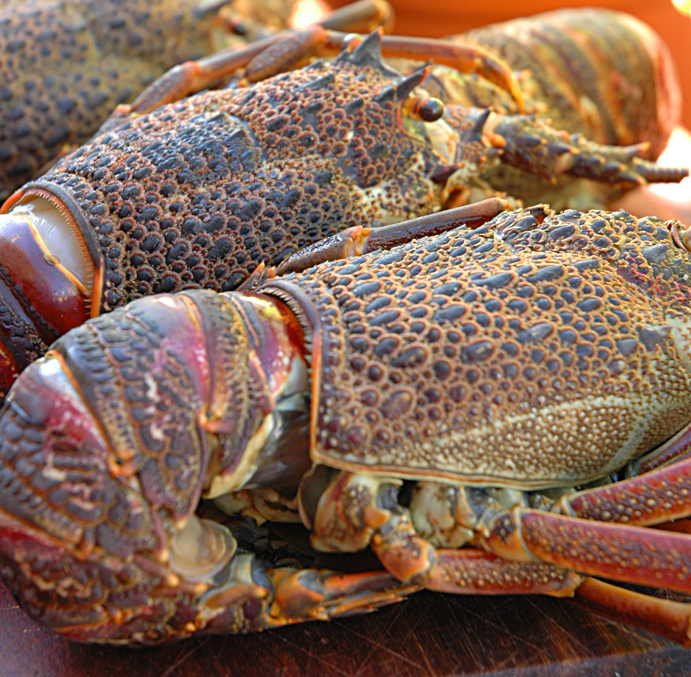 Lobster, crayfish or Kreef delicious and easy to prepare it!